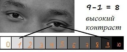 Контраст между радужкой и белком глаза